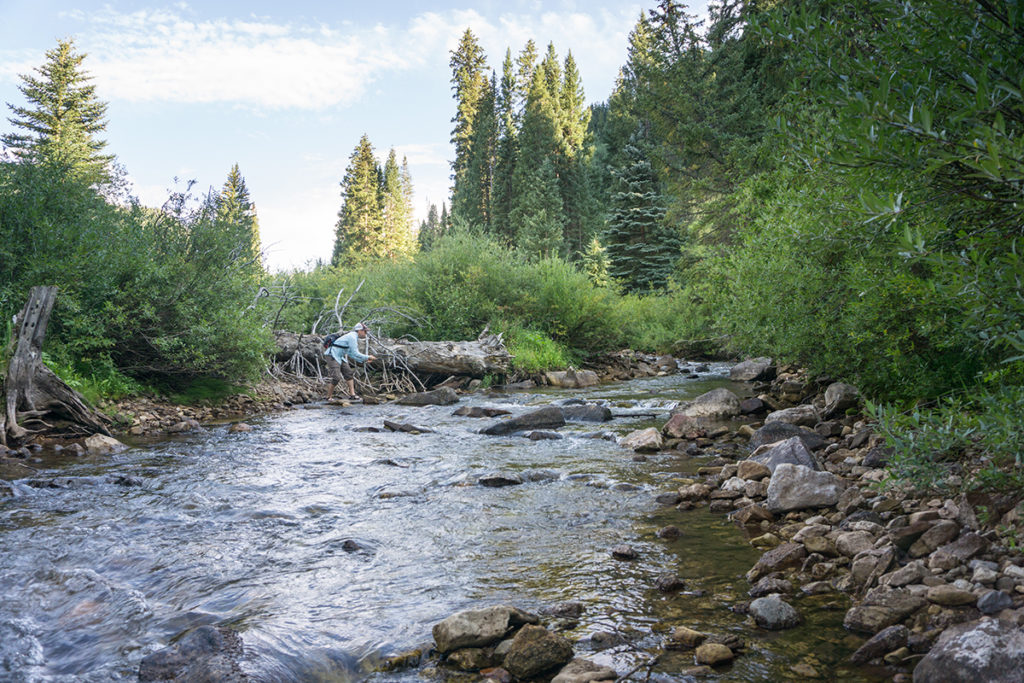Colorado Fly Fishing Trip